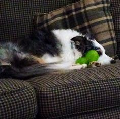 Even when napping Baelei is possessive of her toys. Lol