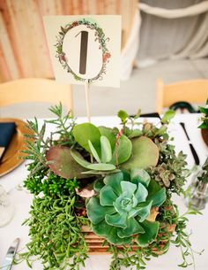 succulent centerpieces, photo by Katie Ruther http://ruffledblog.com/handcrafted-fall-wedding #succulents #centerpiece #wedding