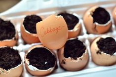 Eggshells + Dirt + Seeds = A great way to start your seeds indoors is by planting them in eggshells. A hole was poked into the bottom of each one so that any excess water could drain. When it comes time to transplant them to the garden, we will simply crunch the shell so that the roots can exit and plant the whole thing.
