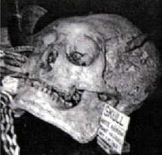 """Giant Human Prehistoric Nephilim Skull that was found In Oregon.  Many of the skulls were described as the """"Missing Link"""" with sloping foreheads, protruding brow ridges and massive jaws. Identical skull types were found on the Atlantic coast."""