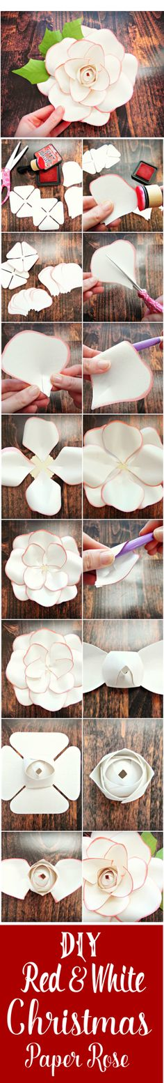 Christmas red tipped DIY paper rose. Paper rose templates and tutorial. Giant paper flowers. Flower wall.