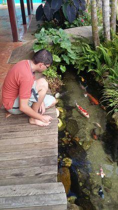 Contemplar os peixes de um lago ornamental é sempre muito bom...