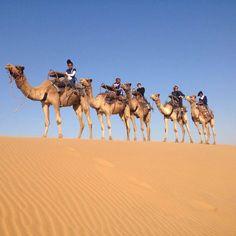 Camel ride in the desert. Swakopmund Namibia