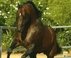 Outwest Stallion Station - Easy Otie Whiz