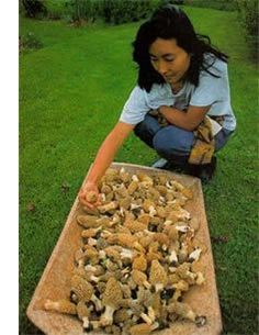 """""""A Guide to Hunting for Morel Mushrooms"""" A guide to hunting for Morels. Mushroom hunting can be a wonderful, healthy outdoor experience to share with family and friends. But the thrill of the hunt is only half the enjoyment. From MOTHER EARTH NEWS Blog"""