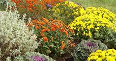 10 flores perennes de otoño para sumar color al jardín - Jardinería