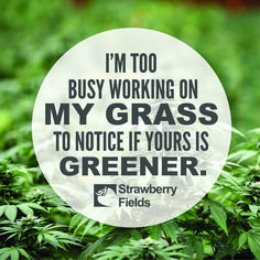 I'm too busy working on my grass to notice if yours is greener. Weed Humor, Puff And Pass, Strawberry Fields, Cannabis, Mental Health, Grass, Business, Grasses, Ganja