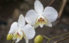 orquideas blancas wallpaper - Buscar con Google