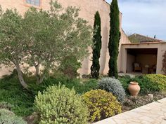 Our olive tree and shady pool house
