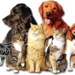 Animal Shelter- ~ Middle School Youth Community Service