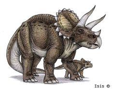 Triceratops | Triceratops by *IsisMasshiro on deviantART