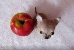 little cute dog - Toudi from Poland Wrocław