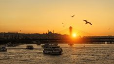 The beauty of Istanbul never ends and moonlit tours are very popular. You can dine and enjoy the entertainment as part of a group tour or choose to hire the entire boat for a bespoke tour where everything is arranged to your specifications. Underwater Creatures, Underwater World, Perfect Image, Perfect Photo, Love Photos, Cool Pictures, Istanbul Travel, City People, Water Activities