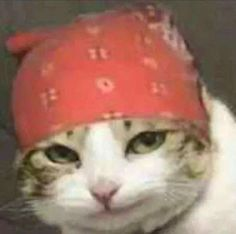 animals it looks like the same bandana and everything me jinxedcats for more cats! Funny Animal Jokes, Funny Animal Pictures, Cute Funny Animals, Animal Memes, Funny Cats, Gatos Cool, Cat Icon, Photo Chat, Cat Aesthetic