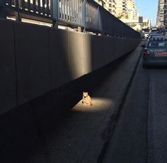 """""""If videogames have taught me anything, this cat has a side-quest to offer me..."""""""