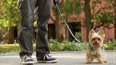 Your search for the perfect dog leash is over! The Quirky Kōsoku is a fully-featured leash designed with both doggy and owner comfort in mind. You'll both find Kōsoku's combination of plush and rigid materials the ideal walking companion.