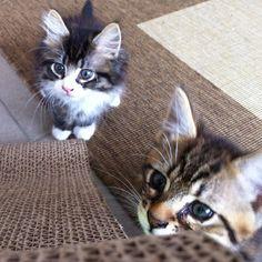 Kittens!!!! share cute things at www.sharecute.com