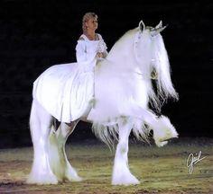 silver Phoenix.. what a goreous horse!!