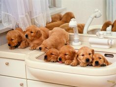 Cute Puppies HD Wallpapers - HD Wallpapers Blog