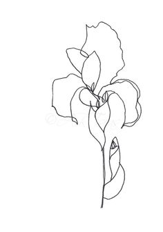 "ORIGINAL Abstract Minimalist Drawing; ORIGINAL Botanical Illustration; ""Blume""; Botanical Drawing, Flower Drawing"