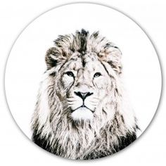 Feb 2019 - Are you interested in our lion face illustration print? With our animal print wallpaper magnetic you need look no further. Animal Print Wallpaper, Lion Wallpaper, Wallpaper Decor, Vinyl Wallpaper, Lion Head Tattoos, Small Lion Tattoo, Tatoos, Scandinavian Wallpaper, Wall Stickers Animals