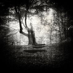 Ant Skelton - Up To The Tree #tree #bw #500px
