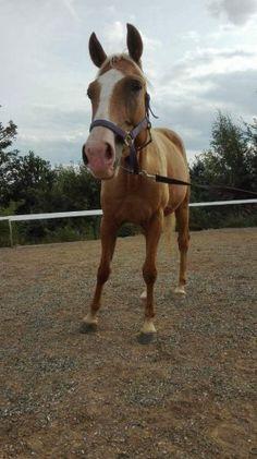 Kůň do sportu - 1