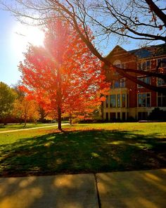 There's nothing better than a beautiful fall day on MSU's campus.
