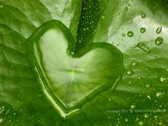 Green heart in nature I Love Heart, With All My Heart, Happy Heart, Heart In Nature, Heart Art, God's Heart, In Natura, Rain Drops, Dew Drops