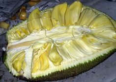 #Jackfruit  Scientific name : Artocarpus heterophyllus  Big sized fruit, could be bigger than your shoulder width. The bigger it is, the more yellow and sweet sacks you'll find inside. Just don't mistake them with the white tasteless ones :D
