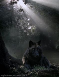 Solitude by wolfenchanter.deviantart.com on @deviantART