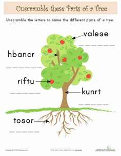 Printables Parts Of A Tree Worksheet parts of a tree printable worksheets with answer key and fill in for kids