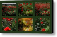 Umbrian Wild Flowers 4 Canvas Print / Canvas Art By Dorothy Berry-lound