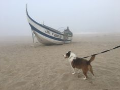 E hoje demos um saltinho à praia 🙂 ainda com muita névoa mas praia é sempre praia 😜   #4EveryPet #HouseSitting #DogWalking #Brownie #PraiaMira