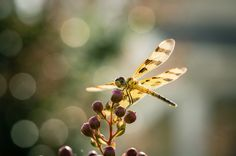 Photography Week- Photo of the day- Dragonfly by Paul Christopher Taylor