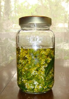 Yarrow Flowers Infused Coconut Oil