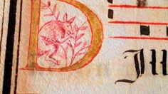 Image of what is thought to be a kangaroo on a 16th century processional could lend weight to the theory that the Portuguese were the first ...