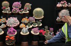Chelsea Flower Show cactus display 2016