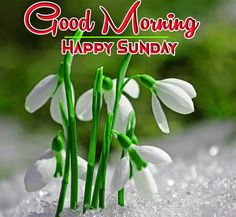 awesome  good morning happy sunday hd images Good Morning Coffee Images, Good Morning Happy Sunday, Free Good Morning Images, Good Morning Wishes, Flower Pictures, Nature Pictures, Happy Sunday Hd Images, Blessing Message, Sunday Greetings