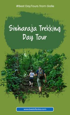 day trip trips and excursions to sinharaja rainforest tours to Sinharaja from Colombo to Sinharaja Rainforest rainforest day tours trekking day trip departing from Galle Day Tours, Day Trip, Sri Lanka, Trekking, Trips, Activities, Viajes, Traveling