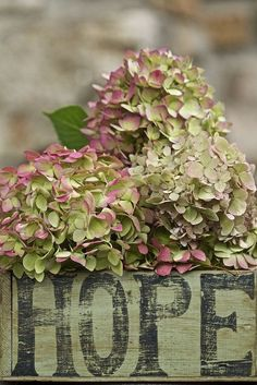 Hydrangea Hamburg in all its Vintage glory!. Modern Country Style: The Top Ten Best Green Hydrangeas For A Modern Country Garden Click through for details.