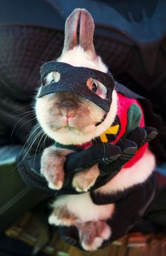 Bunny Robin- I can't stand the cuteness! Pets in Funny Costumes