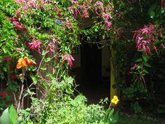 Jane's Garden Casa Colonial
