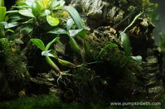 BiOrbAir Review - Growing Miniature Orchids in the BiOrbAir (part ten) - Pumpkin Beth