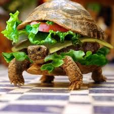 Dont forget to feed your Horsefield/Russian tortoise!  Here is a food guide on our site: http://www.horsefieldtortoise.co.uk/horsefield-tortoise-food