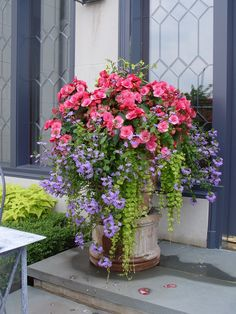 Container garden with begonias, scaveola, and creeping Jenny