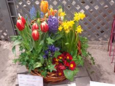 Spring Flower Floral Display