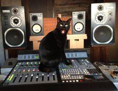 cats 'n synteshizers