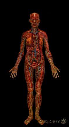 Lymphatic System by Alex Grey Oil on Linen, 84 x 46 in. Alex Grey, Alex Gray Art, Grey Art, Sacred Geometry Tattoo, Fibonacci Spiral, Jamie Hewlett, Lymphatic System, Flower Of Life, Sacred Art