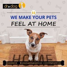 Dr Dog Hospital is only 24 Hr & No 1 Pet multipolarity hospital in Hyderabad aims to offer smiles by providing best treatment to all breads of pet Dogs, Cats. Over 7 years, we assessed needs and always provided high quality veterinary services (surgeries, consulting, medicines, pet diet & care both in-patient & Home visit. Our team of expert Veterinary doctors always round the clock to shower all the love and care to your loved one need. We are proud to be No 1 Pet Hospital. Veterinary Surgeon, Veterinary Services, Dental Services, Small Animal Hospital, Pet Hospital, Pet Clinic, Intensive Care Unit, Love Your Pet